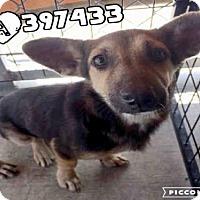 Adopt A Pet :: A397433 - San Antonio, TX