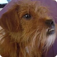 Adopt A Pet :: Captain 2016 - Cary, NC