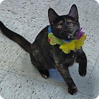 Adopt A Pet :: Kate - Chambersburg, PA