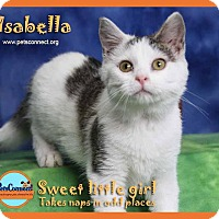 Adopt A Pet :: Isabella - South Bend, IN