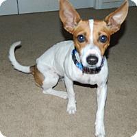 Adopt A Pet :: Jack - Umatilla, FL