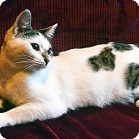 Adopt A Pet :: Fiona - Savannah, GA