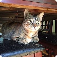 Adopt A Pet :: Momma Abby - Bentonville, AR