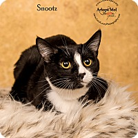 Adopt A Pet :: Snootz - Cincinnati, OH
