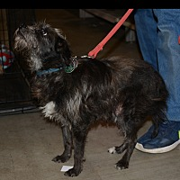 Adopt A Pet :: Dyson - Hopkinsville, KY