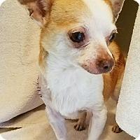 Adopt A Pet :: Pedro - Durham, NC