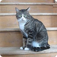 Adopt A Pet :: Zazzy - Ridgway, CO
