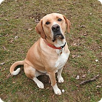 Adopt A Pet :: Phin - New Oxford, PA