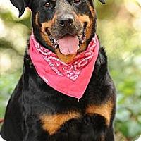 Adopt A Pet :: Tigger -I'm a Lover & Snuggler - Menlo Park, CA