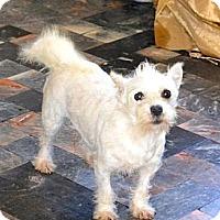 Adopt A Pet :: Lunita - San Diego, CA