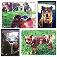 Adopt A Pet :: Ushie - Evansville, IN