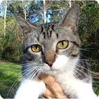 Adopt A Pet :: Britt - No.Charleston, SC