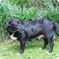 Adopt A Pet :: Ralphie (Ralphina) - Rome, NY