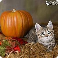 Adopt A Pet :: Minnie - Eagan, MN