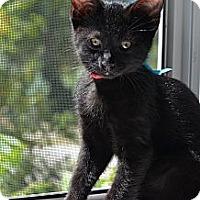 Adopt A Pet :: William - Xenia, OH