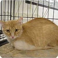 Adopt A Pet :: Nanette - The Colony, TX