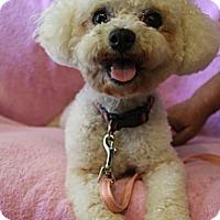Adopt A Pet :: Lolli Pop - Wytheville, VA