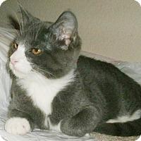Adopt A Pet :: Ninon - North Highlands, CA