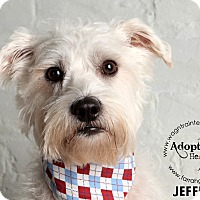Adopt A Pet :: Jeffrey-adoption pending - Omaha, NE