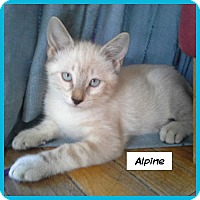 Adopt A Pet :: Alpine - Miami, FL