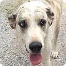 Adopt A Pet :: Wilson