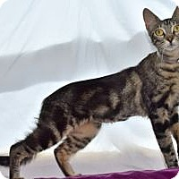 Adopt A Pet :: Nema - Colorado Springs, CO