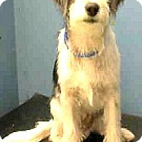 Adopt A Pet :: Nero-ADOPTION PENDING - Boulder, CO