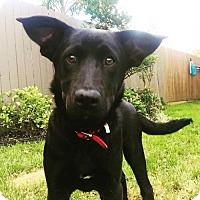 Adopt A Pet :: Tori - Houston, TX