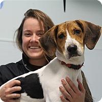 Adopt A Pet :: Willard - Elyria, OH
