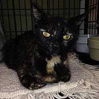 Adopt A Pet :: KERRI - Cleveland, TN
