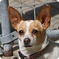 Adopt A Pet :: Noelle - Edmonton, AB
