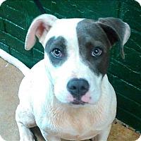 Adopt A Pet :: Suzy - Birmingham, AL