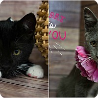 Adopt A Pet :: Tennille & Captain - Brockton, MA
