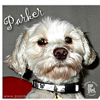 Adopt A Pet :: Parker - Essex Junction, VT