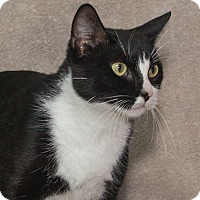 Adopt A Pet :: Eloise - Elmwood Park, NJ