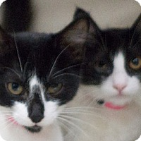 Adopt A Pet :: Tippy - Redwood City, CA
