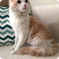 Adopt A Pet :: Hollywood - Addison, IL