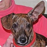 Adopt A Pet :: Buggz - Spokane, WA