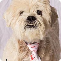 Adopt A Pet :: Lenny - Gilbert, AZ