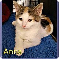 Adopt A Pet :: Anna - Aldie, VA