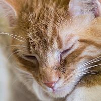 Adopt A Pet :: BROCKY - Houston, TX