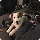 Adopt A Pet :: Albus