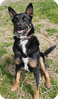 Shepherd (Unknown Type) Mix Dog for adoption in Grants Pass, Oregon - Jada