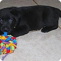 Adopt A Pet :: Diesel - Minneola, FL