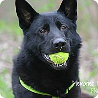 Adopt A Pet :: Codey - Warren, MI