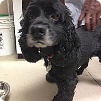 Adopt A Pet :: Rudy - Alpharetta, GA
