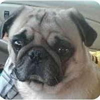 Adopt A Pet :: Samson-NJ - Mays Landing, NJ