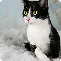 Adopt A Pet :: Angelina **needs a foster** - Eagan, MN