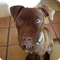Adopt A Pet :: Monkey - santa fe, NM