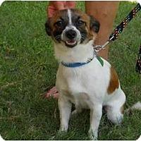 Adopt A Pet :: Teddy - Kingwood, TX